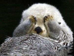A modest otter.